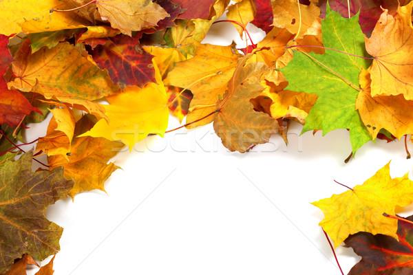 Automne espace de copie forêt nature design feuille Photo stock © BSANI