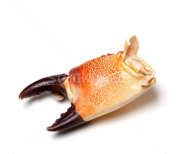 Cooked claw crab isolated on white background Stock photo © BSANI