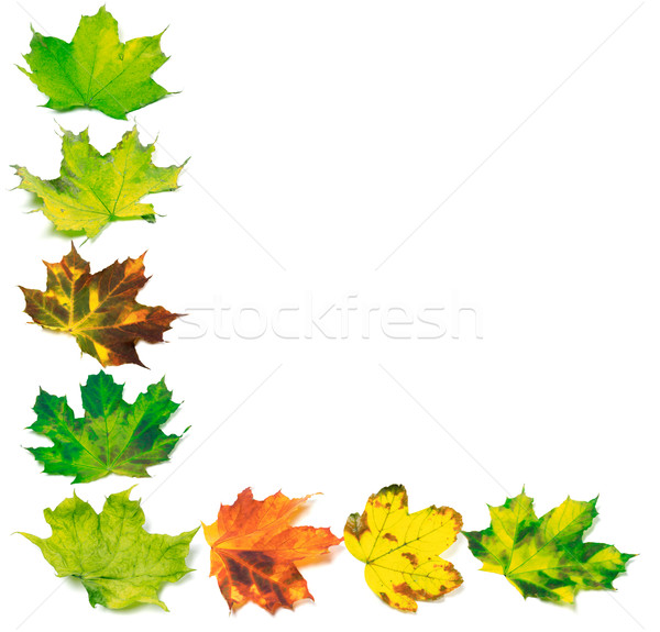 Letter L composed of multicolor maple leafs Stock photo © BSANI