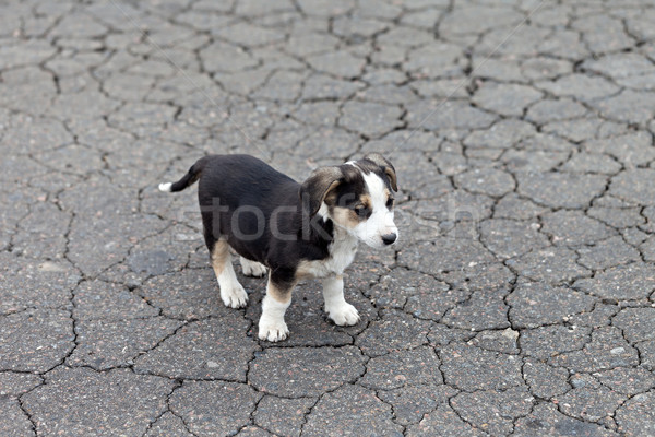 Stockfoto: Eenzaam · triest · puppy · gebarsten · grond · hond