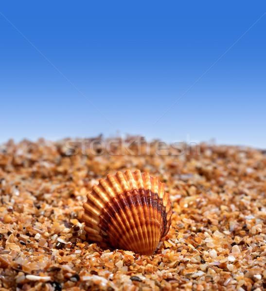 Seashell on sand Stock photo © BSANI