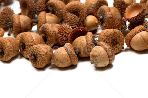 Autumn oak acorns on white Stock photo © BSANI