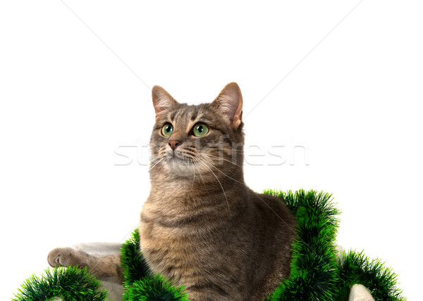 Gray cat with green eyes sitting in basket with Christmas tinsel Stock photo © BSANI