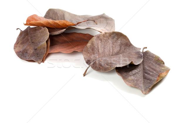 Drogen najaar magnolia bladeren geïsoleerd witte Stockfoto © BSANI