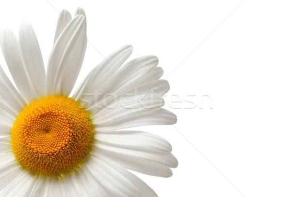 Yalıtılmış beyaz bo çiçek yaprak Stok fotoğraf © BSANI