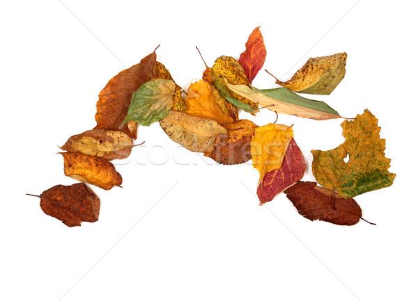 Outono isolado branco cópia espaço árvore Foto stock © BSANI