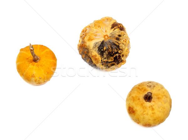Three small decorative pumpkin Stock photo © BSANI