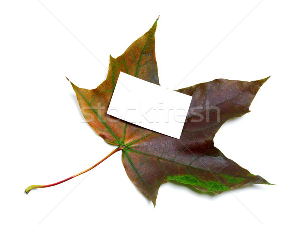 Multicolor autumn maple leaf with white empty price card Stock photo © BSANI