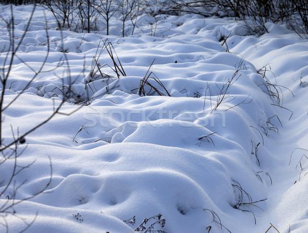 Snowbound winter meadow Stock photo © BSANI