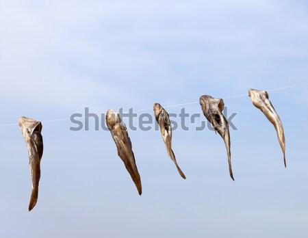 Stockfish drying on sun Stock photo © BSANI