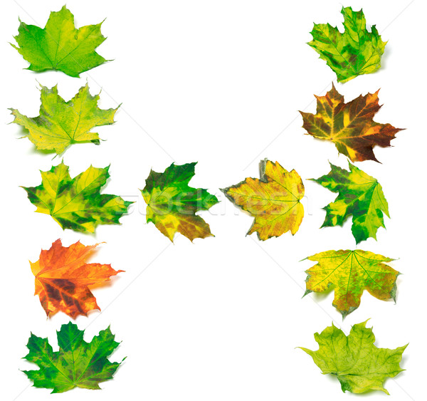 Letter H composed of multicolor maple leafs Stock photo © BSANI