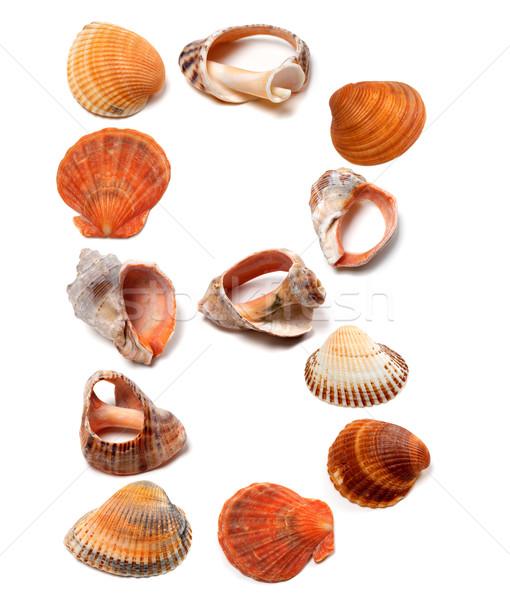 Letter B composed of seashells Stock photo © BSANI