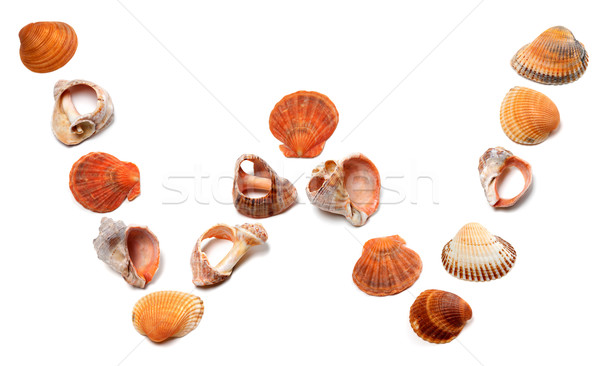 Letter W composed of seashells Stock photo © BSANI
