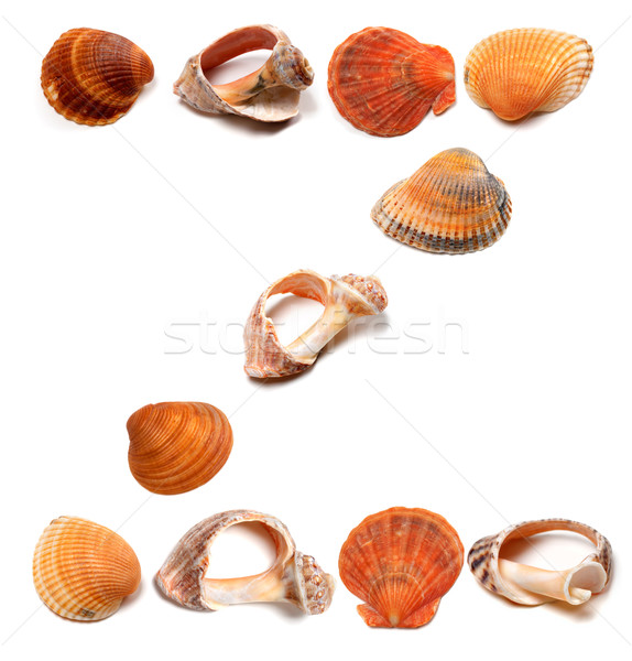 Letter Z composed of seashells Stock photo © BSANI