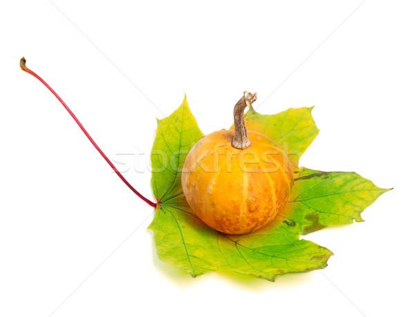 Small decorative pumpkin on yellowed maple-leaf Stock photo © BSANI