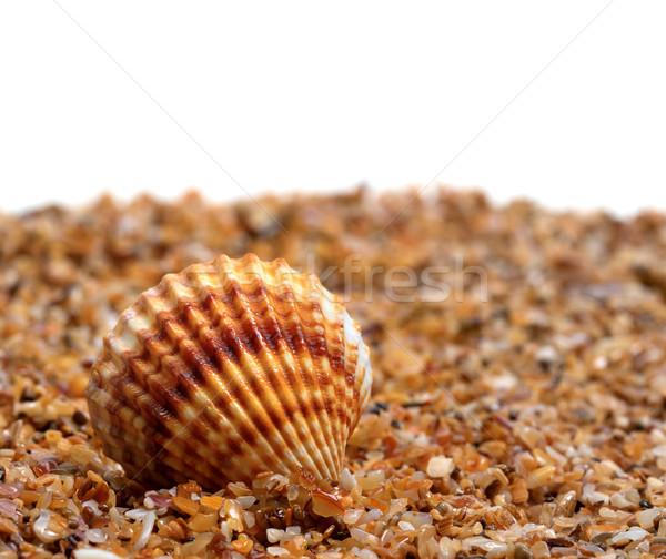 Kagyló homok fehér copy space tengerpart étel Stock fotó © BSANI