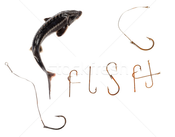 Fresh sterlet and word F I S H composed of old rusty fish hooks Stock photo © BSANI