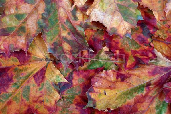 Outono escolas floresta natureza projeto folha Foto stock © BSANI