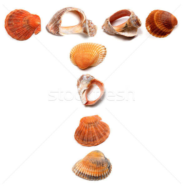 Letter T composed of seashells Stock photo © BSANI