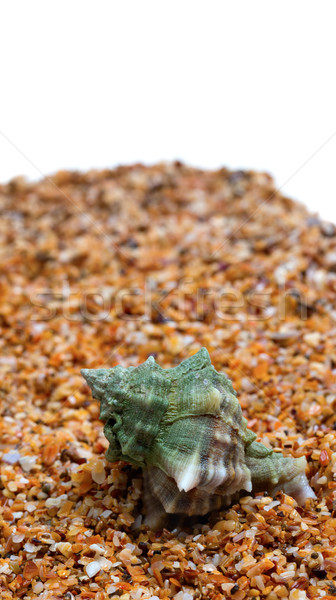 Seashell on sand with copy space Stock photo © BSANI