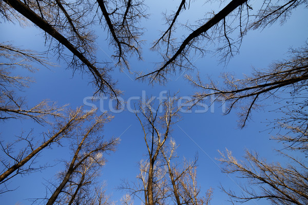Autumn forest and blue sky Stock photo © BSANI