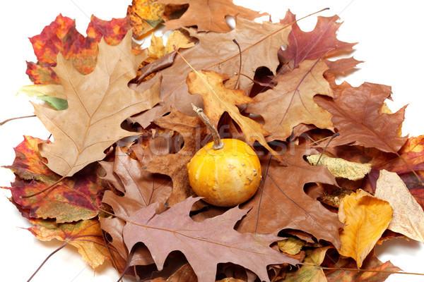 Pequeno decorativo abóbora outono secar comida Foto stock © BSANI