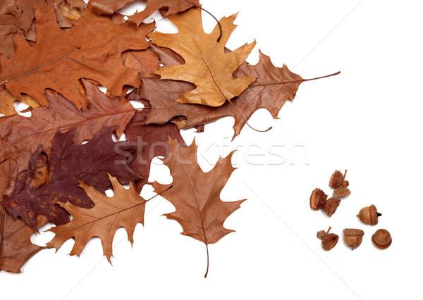 Autumn dried leafs of oak and acorns Stock photo © BSANI