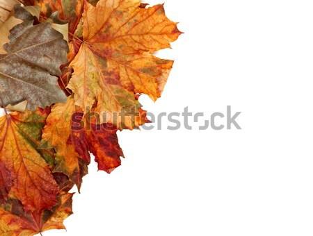 Outono bordo isolado branco cópia espaço Foto stock © BSANI