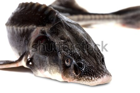 Fresh sterlet fish head Stock photo © BSANI
