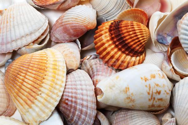 Various seashells in summer Stock photo © BSANI