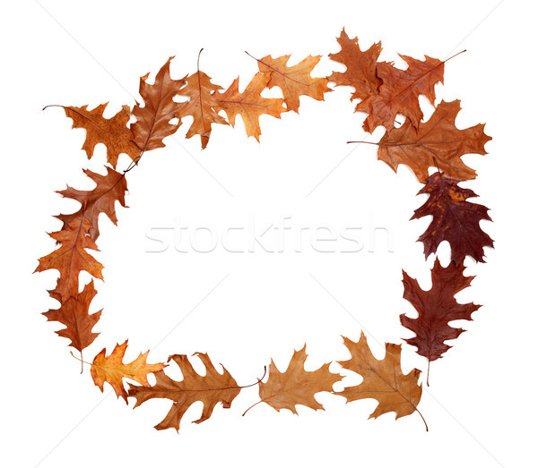 Frame of autumn dried oak leaves with copy space Stock photo © BSANI