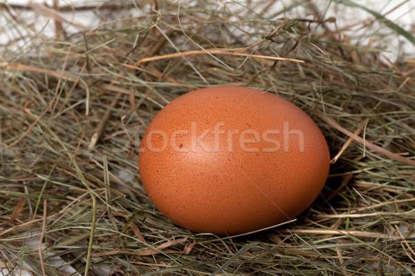 Tavuk yumurta yuva görmek Paskalya Stok fotoğraf © BSANI