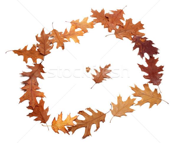 Keret ősz aszalt tölgy levelek izolált Stock fotó © BSANI