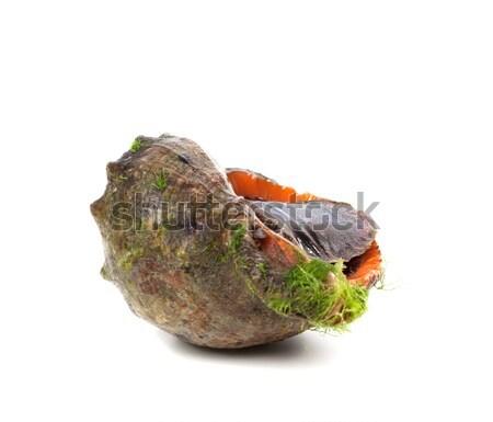 Rapana venosa (thomassiana) Stock photo © BSANI