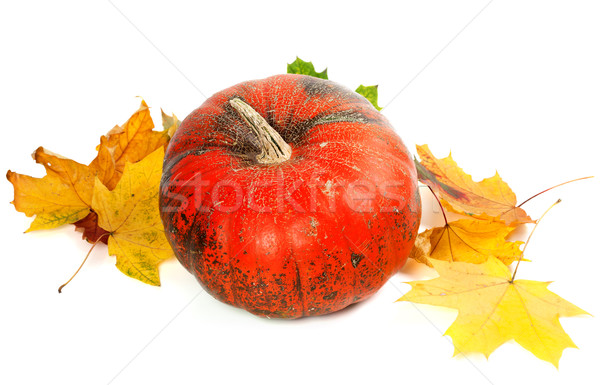 Red ripe pumpkin and autumn yellowed leaves Stock photo © BSANI