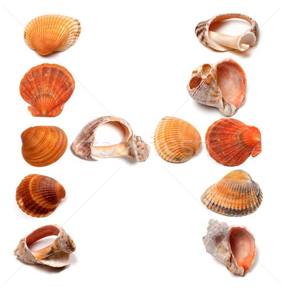 Letter H composed of seashells Stock photo © BSANI