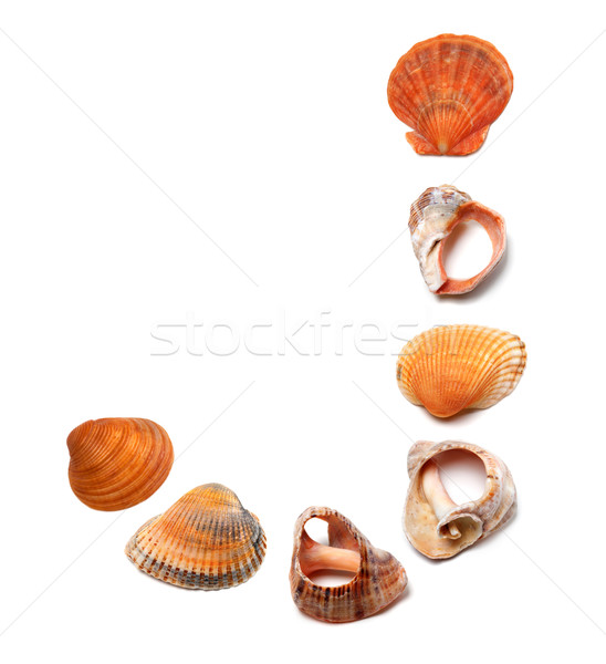Letter J composed of seashells Stock photo © BSANI