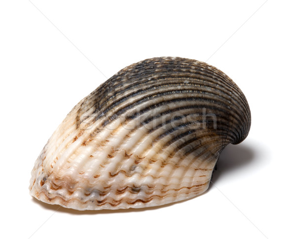 Seashell Stock photo © BSANI