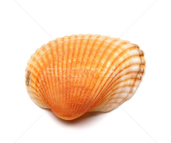 Seashell isolated on white background Stock photo © BSANI