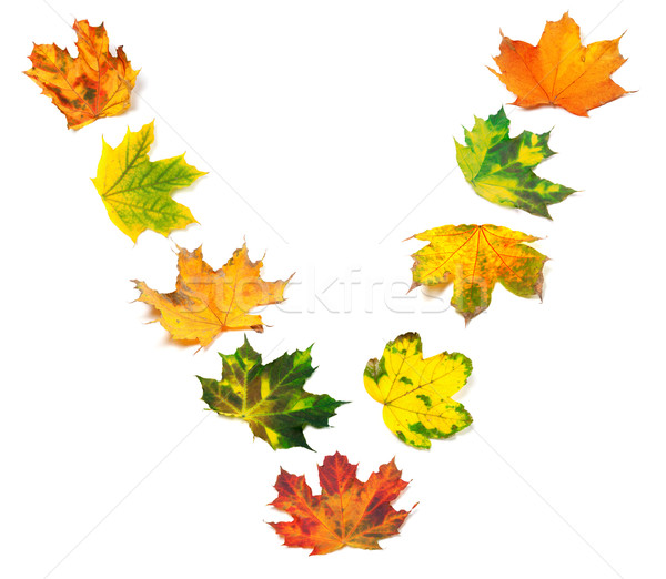 Letter V composed of autumn maple leafs Stock photo © BSANI