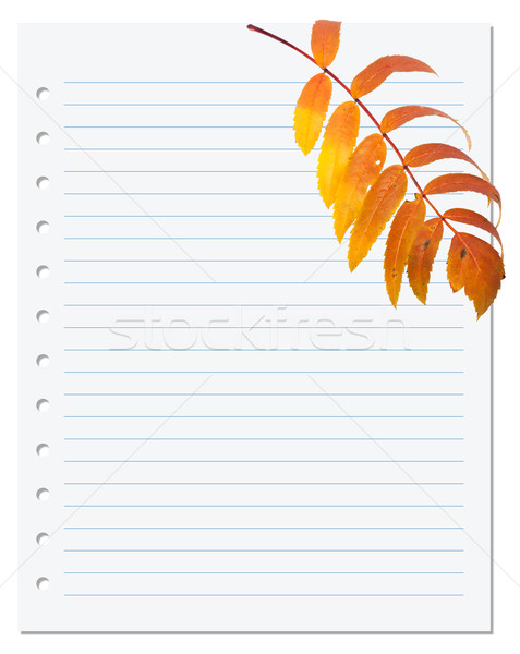 Notebook paper with autumn leaf of rowan Stock photo © BSANI