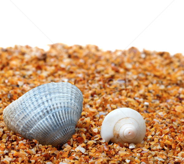 Two seashell on sand and white background Stock photo © BSANI