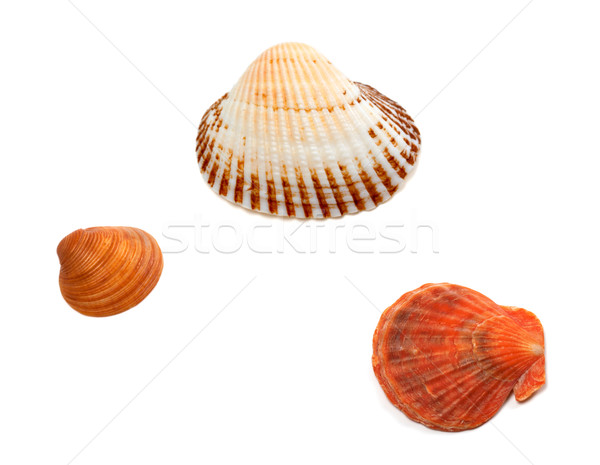 Three seashells Stock photo © BSANI