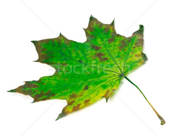 Zöld izolált fehér szelektív fókusz tavasz terv Stock fotó © BSANI