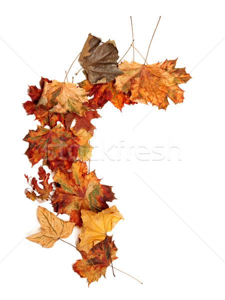 Autumn dried multicolor maple leafs Stock photo © BSANI