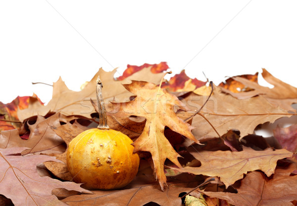 Small decorative pumpkin on autumn dry leaves from oak Stock photo © BSANI
