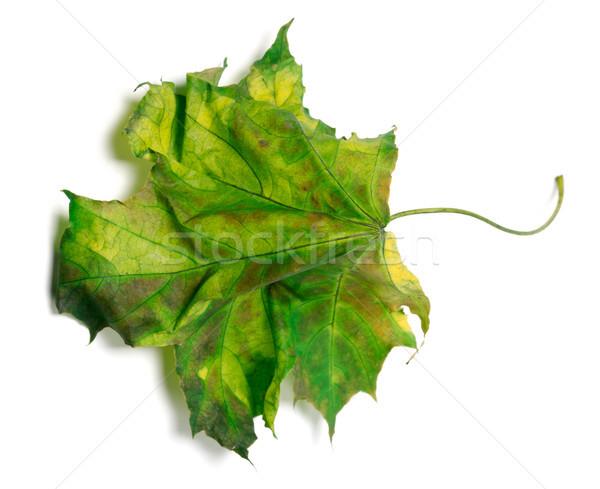 Yellowed maple-leaf on white background Stock photo © BSANI