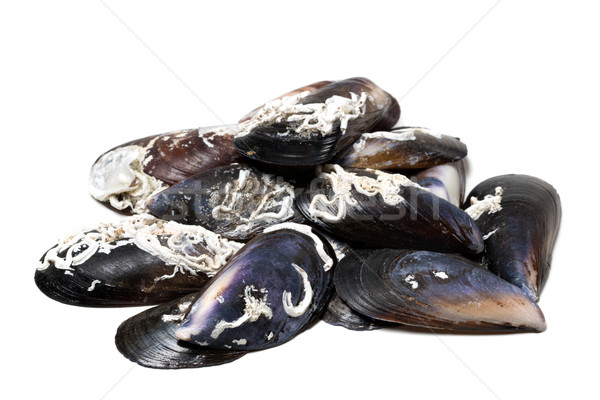 Shells of mussels on white Stock photo © BSANI