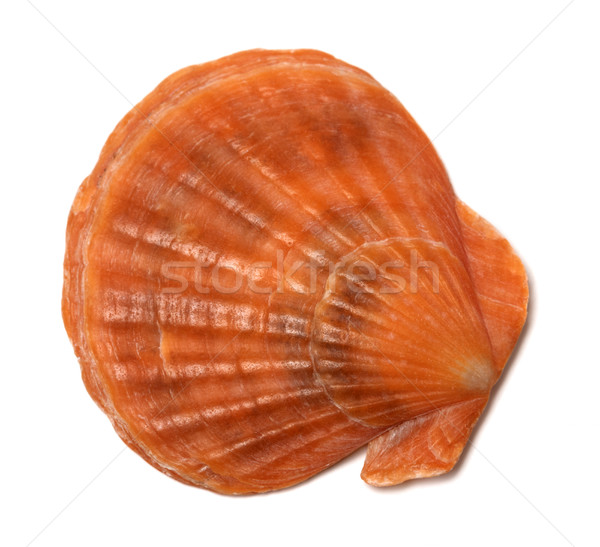 Scallop shell on white Stock photo © BSANI