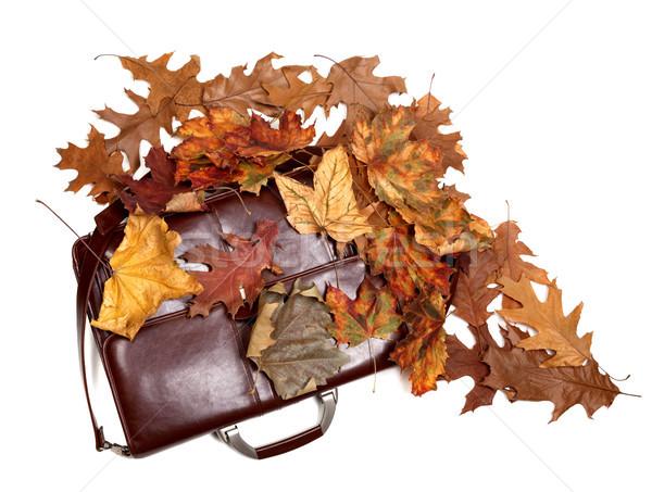 Brązowy skóry teczki jesienią wyschnięcia pozostawia Zdjęcia stock © BSANI